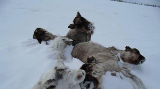 Die Polarregionen in einer 2°C wärmeren Welt
