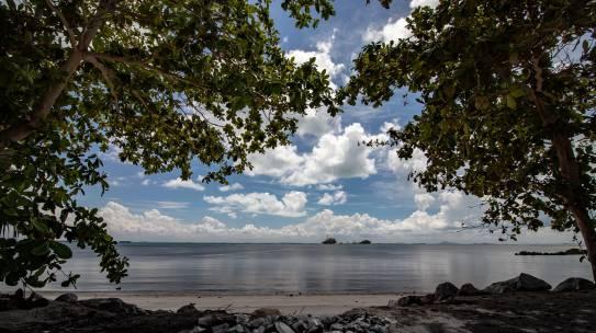 Rechte der Natur: Das wahre Ziel des Ökozids