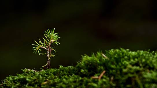 Degrowth und Recht – Wie kann man diese Konzepte verbinden?